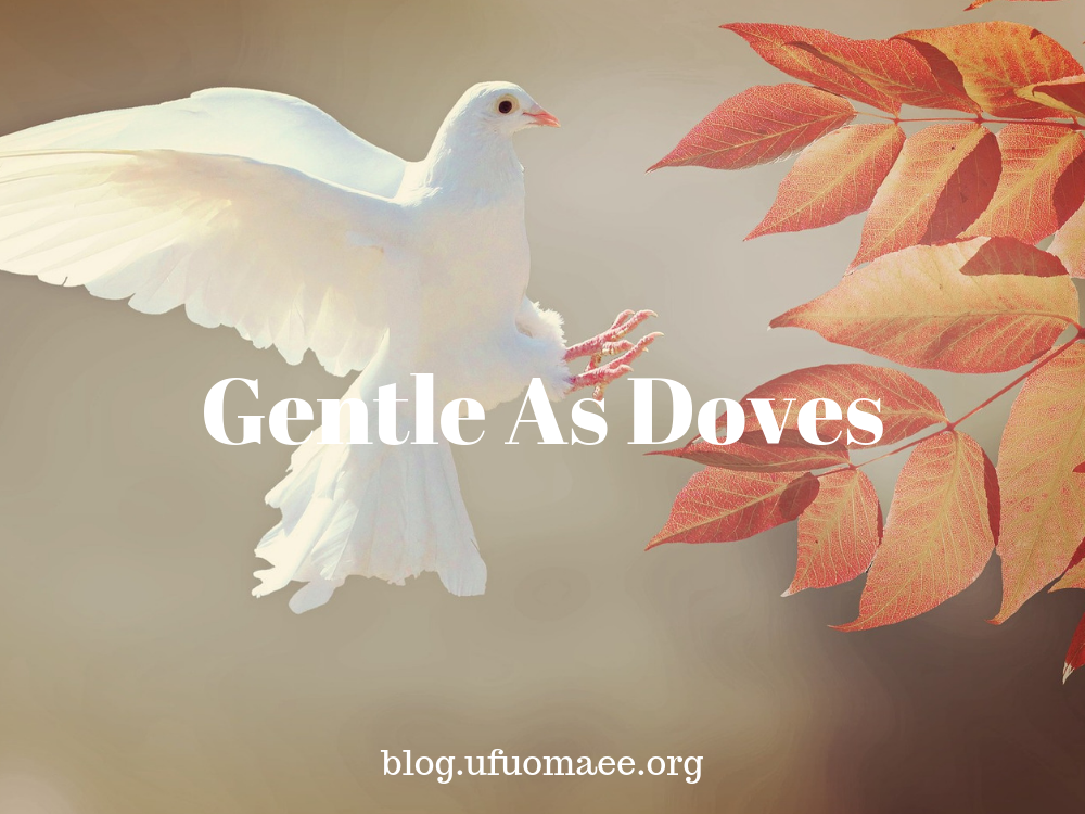 Editor's Pick: Gentle as Doves